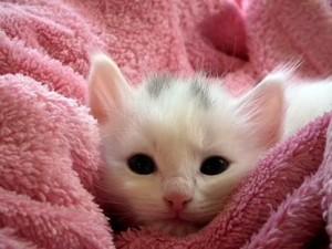 引用:https://pixabay.com/static/uploads/photo/2013/12/12/03/08/kitten-227009_640.jpg?attachment