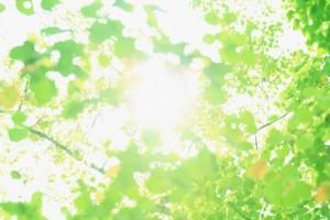 引用:http://www.photo-ac.com/main/detail/9420