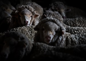 引用: https://www.zegna.jp/content/dam/Zegna/FW16/The_History/sheep-graze.jpg/jcr:content/renditions/Full@2.jpg